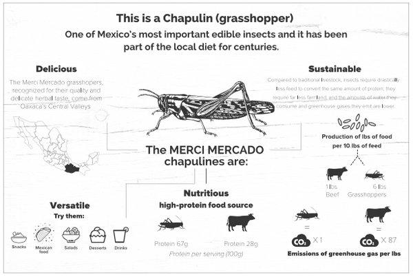 Chapulin Grasshopper